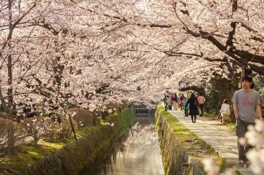 japan-cherry-blossoms-sakura-2938