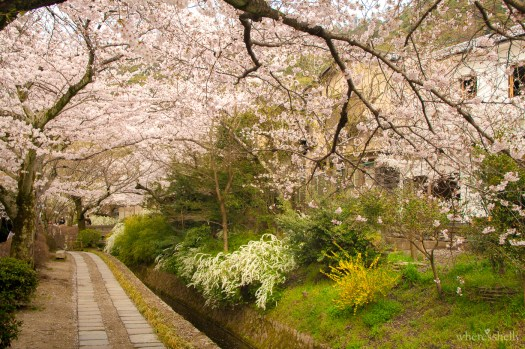 japan-cherry-blossoms-sakura-3253