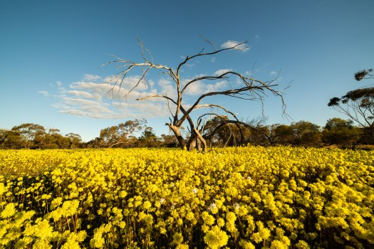 coalseam-conservation-park-wildflowers-5