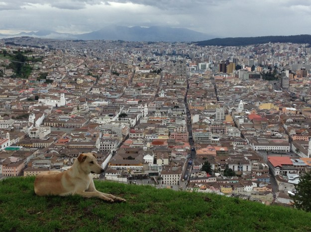 A view of Quito, Ecuador, with unknown dog.