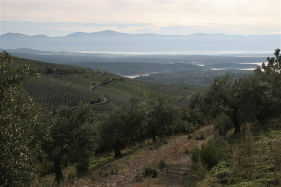 mist-and-olive-groves-1