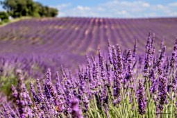 Provence - where the foodies go 10