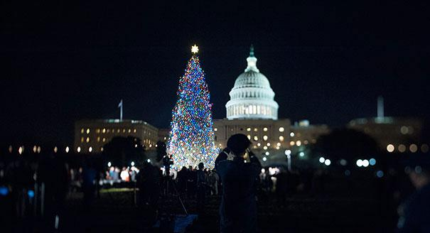 Capital Christmas Tree