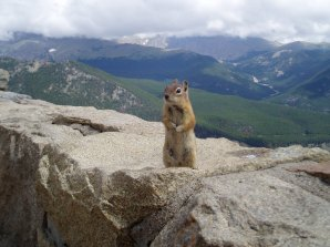 Posing for the camera in the Rockies.