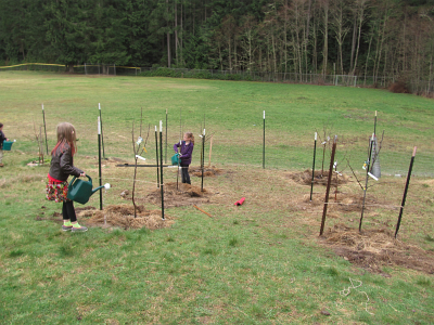 orchard fruit trees just planted_2920