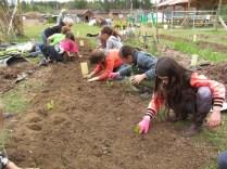 second grade lettuce planting_3432