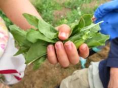 Snack garden handful of veggies_2066