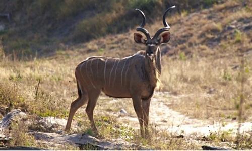 Savuti Reserve