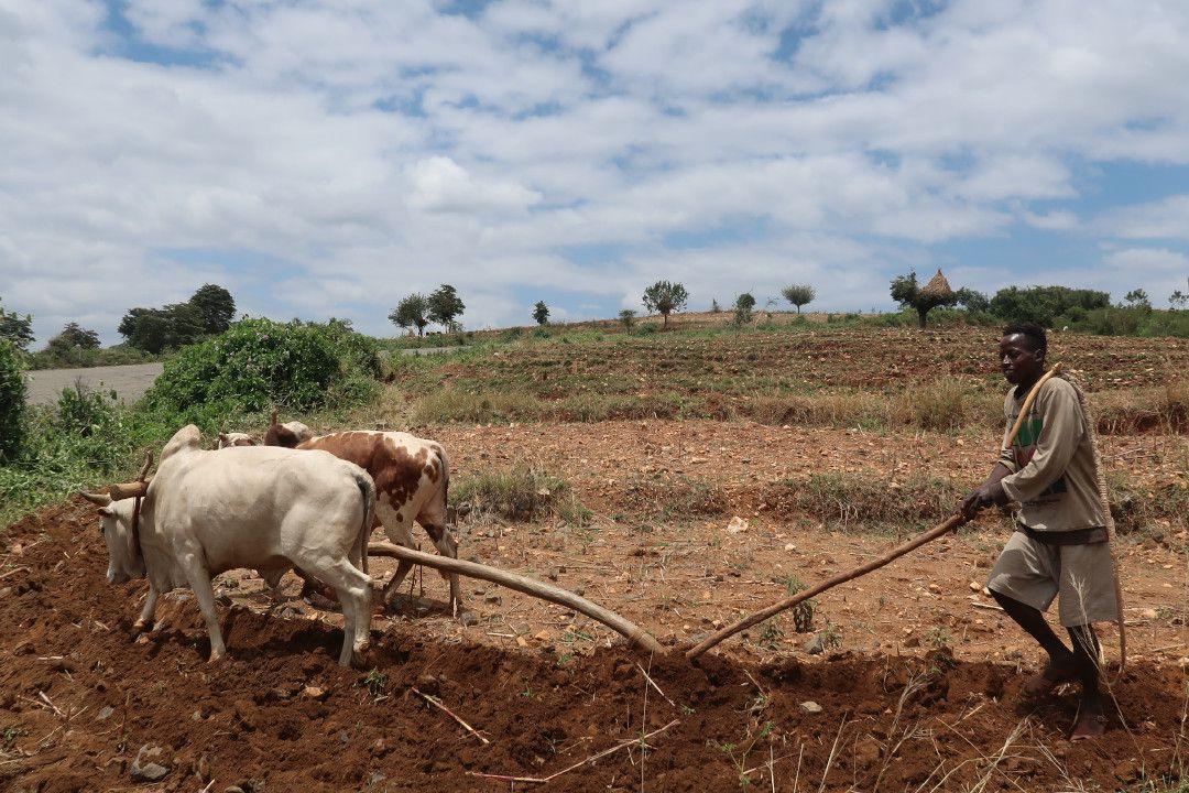 farmer ethiopia.whileinafrica