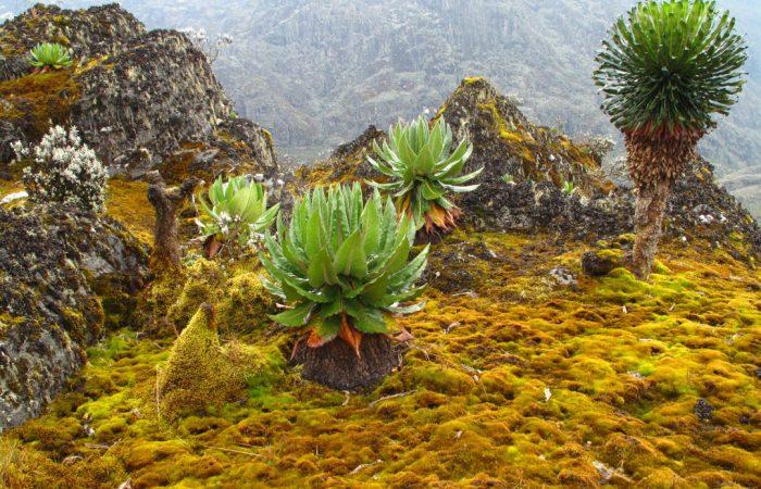 mountain-whileinafrica