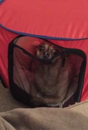 Pet-Owner Heartache & Hefty Vet Bills