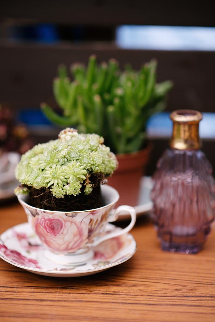 Tea Cup Succulents Tropical 1920s Pink Budget Wedding http://lilysawyer.com/