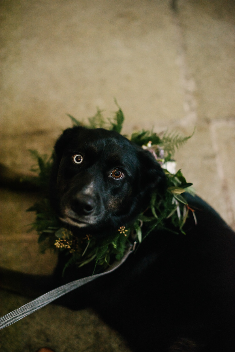 Pet Dog at Wedding Garland Foliage Orange Tree House Wedding Winter You Them Us Photography