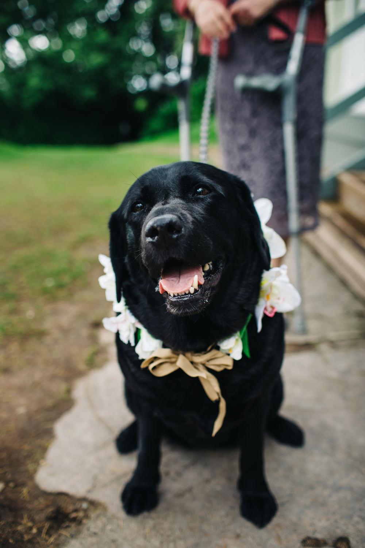 Dog Pet Deer Park Country House Hotel Wedding Richard Skins Photography