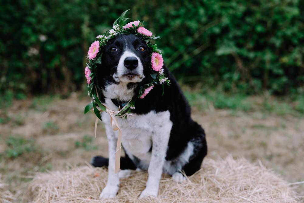 Dog Pet Floral Collar Boho Festival Wedding Matt Bowen Photography