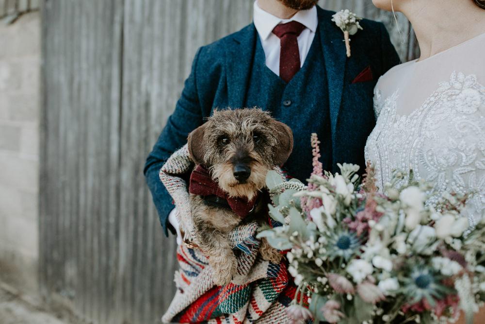 Dog Pet Barn Upcote Wedding Siobhan Beales Photography