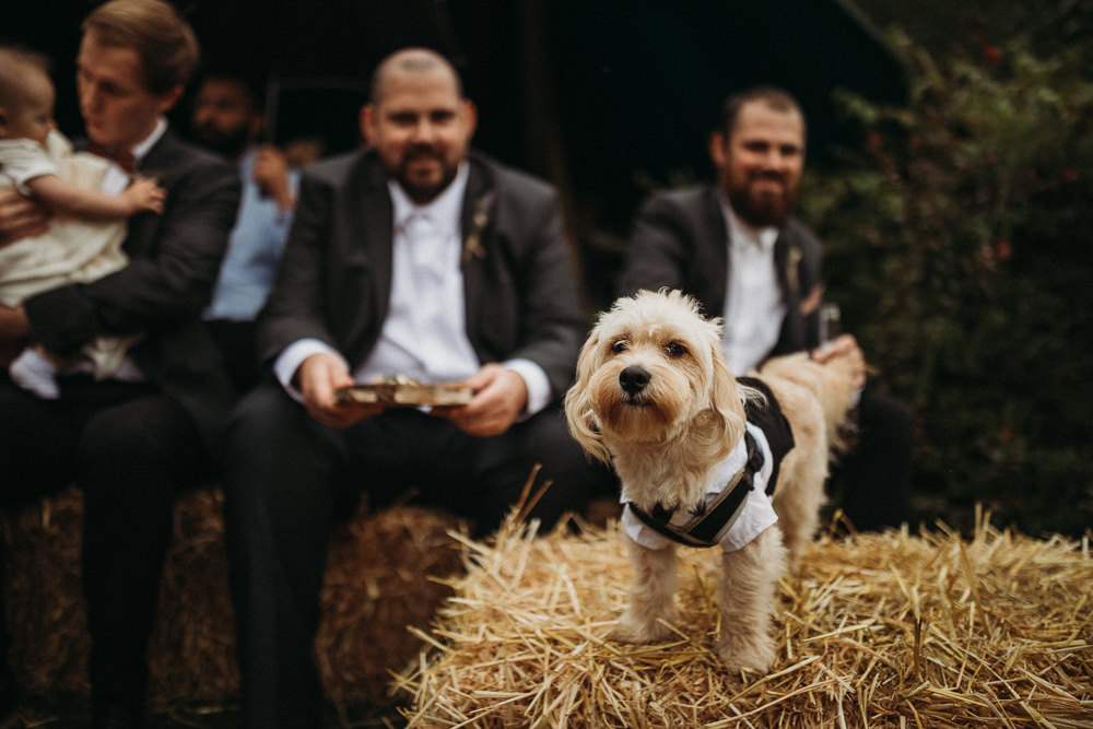 Pet Dog Horsley Hale Farm Wedding Thyme Lane Photography