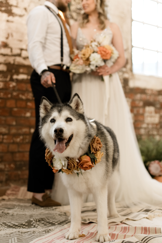 Dog Pet Flower Floral Collar Moroccan Wedding Ideas Emma Louise Photography