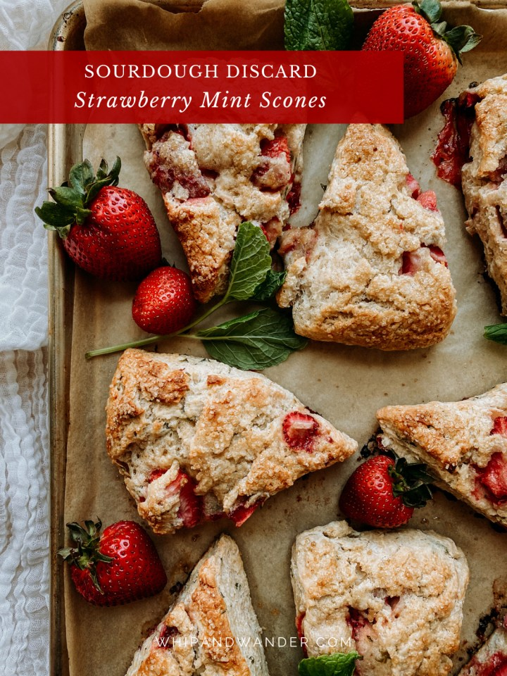 a baking sheet with scones dotted with mint and strawberries