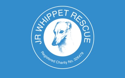 Very special whippet requires very special home