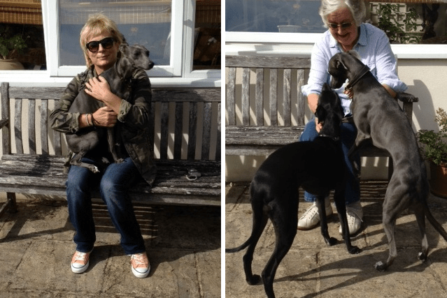 Jennifer Saunders and her whippets