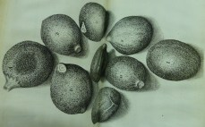 from the Micrographia