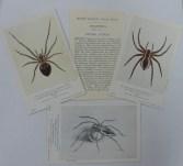 Arachnida cards