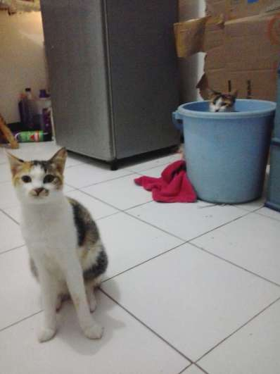 dendeng and unyit watching bucket