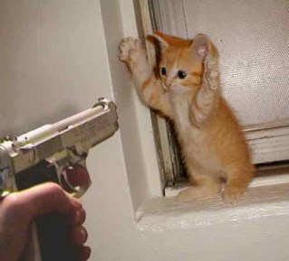 kitty gun point