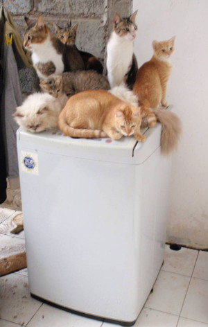 """One small dry spot shared by a few lucky """"mobsters"""""""