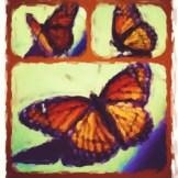 butterfly modern