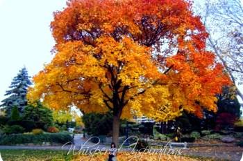Autumn Bliss.