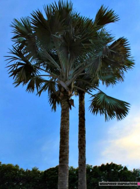 florida-palm-tree-WI