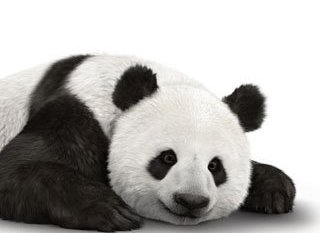 It's Panda-monium with @TELUS and the World Wildlife Fund! #WWF