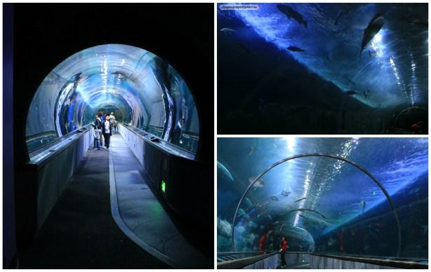 CityPASS-Aquarium-05