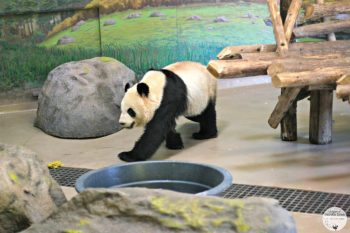 CityPASS Toronto: Spending a Day in the Toronto Zoo. #travel