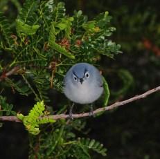 angrybird 13_mad