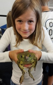 Autumn holding a 5-year old bullfrog.