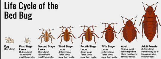 Don T Let The Bedbugs Bite In Your Whistler Vacation