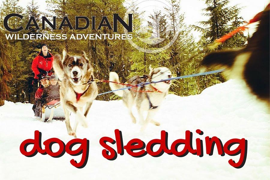 Whistler Dog Sledding Tours