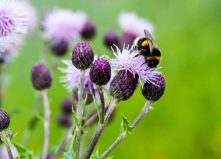 Fuzzy Glasgow Bee 2015