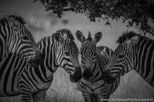 Kenya_May2018-