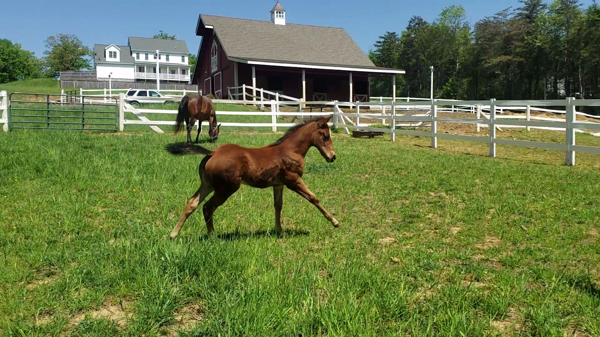 white oak stables rh white oak stables com