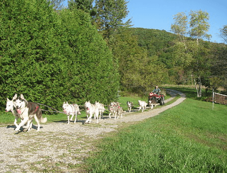 Fall Dogsled Excursion