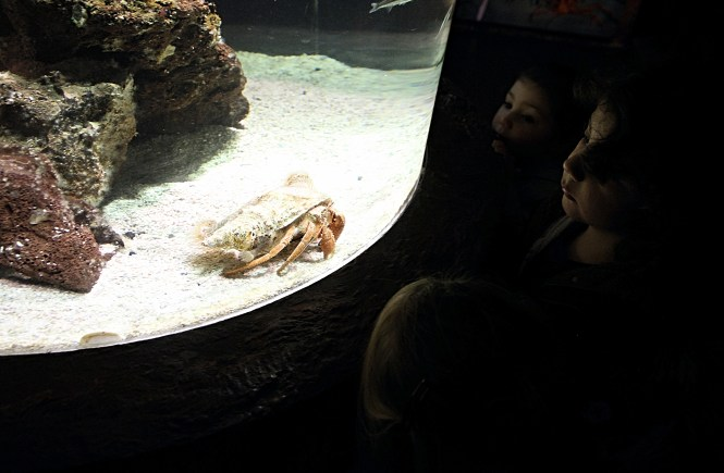 Sealife Porto looking at a friendly crab. A game of light and shadow