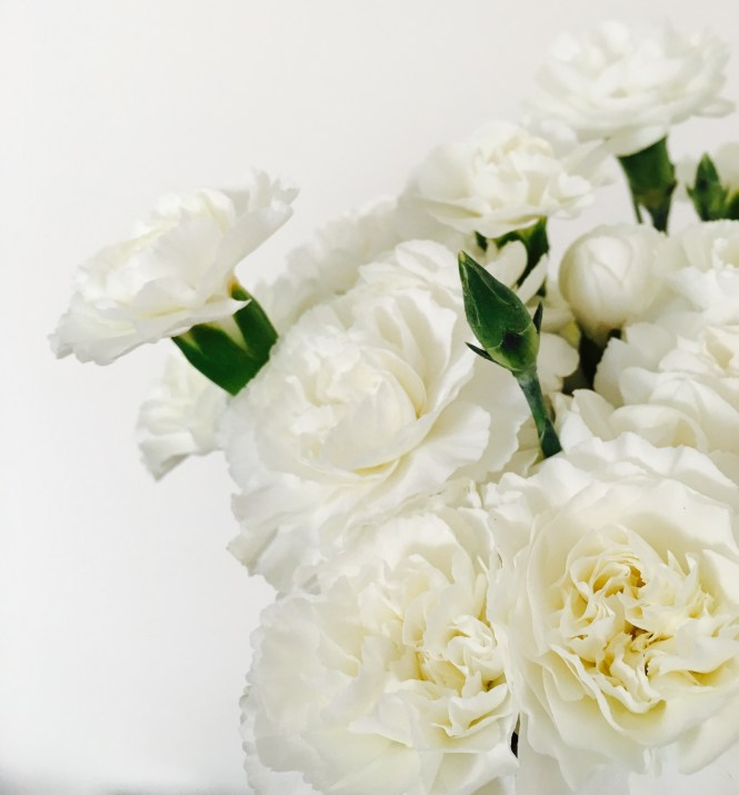 White Carnations - Beautiful Flowers