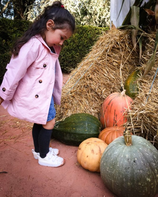 Autumn fest Serralves - pumpkins
