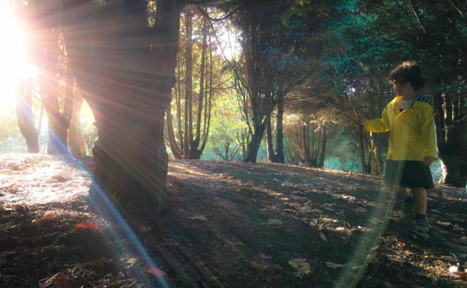 Autumn afternoon in the park  - perfect lighting
