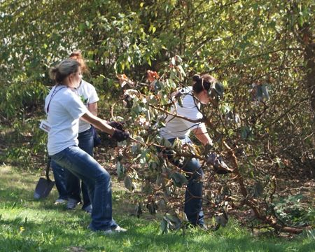 SPU students volunteer at Lakewood Park