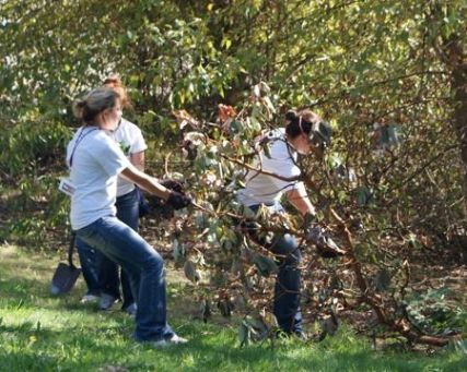 SPU students volunteer at Lakewood Park